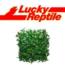 LUCKY REPTILE FLORA MAT - IVY